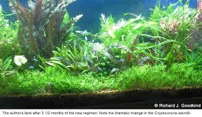 Dramatic Aquascapes How To Achieve A Flourishing Plant Tank By Richard J Goodkind