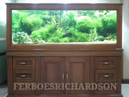 Java Moss Aquascape Inspirasi Aquascape Indah Dengan Rerumputan Java Moss