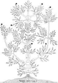 the genealogical world of phylogenetic networks relationship