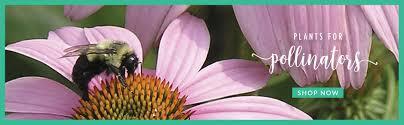 shop p allen smith garden home decor and gifts