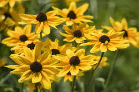 native plants of michigan which perennials survive best in sunny michigan gardens