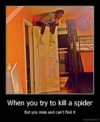 I Tried Killing A Spider - when you try to kill a spider but you miss and can t find it