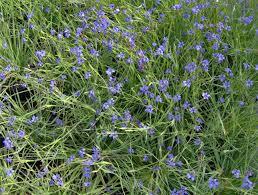 plants native to florida members u0027 day plant sale 2010 fairchild garden 33156