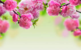 beautiful spring most wanted beautiful spring flowers angelic hugs