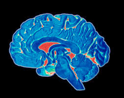 Anatomy And Physiology Of The Brain Brain Anatomy The 4 Lobes Structures And Functions