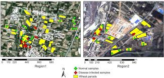 remote sensing free full text damage mapping of powdery mildew