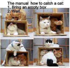 Cat Trap Meme - how to catch a cat weknowmemes