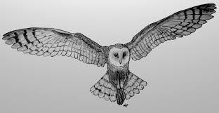 barn owl flying by skoppio on deviantart