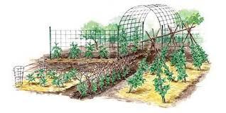 easy pea trellis vertical gardening techniques for maximum returns organic