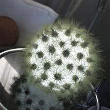Plants That Survive With No Light Notcot Org