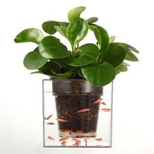 free shipping 1 piece clear tube plant pot flower pot self