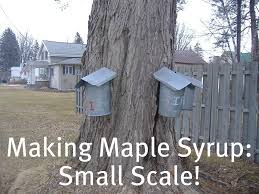 making maple syrup small scale frugal upstate