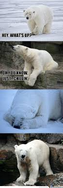Polar Bear Meme - polar bear memes best collection of funny polar bear pictures