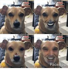 Meme Face App - face app app meme on sizzle