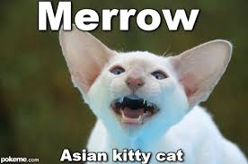Kitty Meme Generator - pokeme meme generator find and create memes