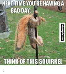 Bad Day Meme - next time you re having a bad day think this squirrel bad day