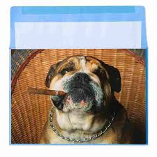 bulldog cigar by marcel schurman birthday cards papyrus
