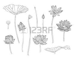 1 601 lotus vector isolated cliparts stock vector and royalty