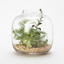 small glass terrarium glass terrarium perfect to put accent