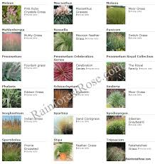 perennials flowering plants ornamental grasses in trays