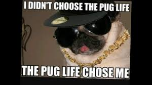 T Dog Memes - cute dog memes youtube
