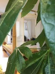 chambre d hote paimpont chambres d hôtes l hotié de brocéliande chambres d hôtes paimpont