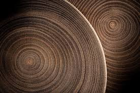 tree rings images What tree rings tell us about the climate jstor daily jpg