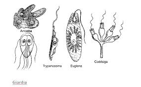 Diseases Caused By Protozoa In Plants - cbse std 8 biology study materials online learning question