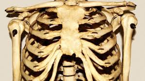 which organs are protected by the rib cage reference com