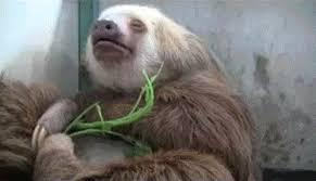 Sloth Meme Generator - sloth meme generator animals giff 9571 funny sloth giffs funny