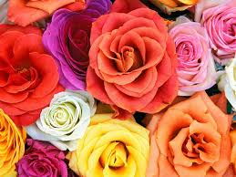 Nice Flower Picture - flower walpaper http whatstrendingonline com flower walpaper