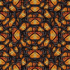 heaps of orange monarch butterflies wallpaper bonnie phantasm