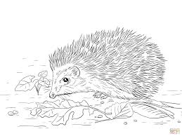 absolutely smart hedgehog coloring pages 5 free hedgehog coloring