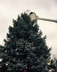 christmas tree removal dispose of your christmas tree 46 in