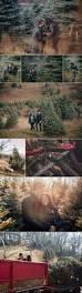 luke karli michigan winter tree farm proposal marriage