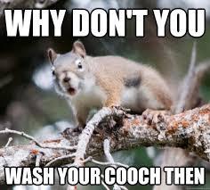 Sarcastic Love Memes - sarcastic squirrel memes quickmeme