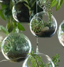 how to plant a terrarium windowbox com blog