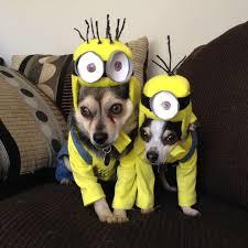 Chihuahua Halloween Costumes Funny Easy Halloween Costume Ideas Halloween Decorations