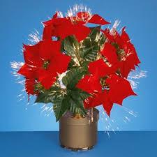 fibre optic poinsettia floral arrangement