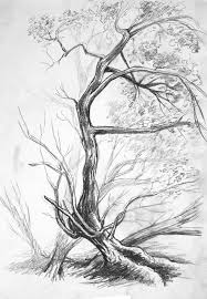 White Oak Tree Drawing Nature Objects Oak Tree