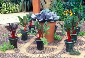 easy diy potted vegetable garden boundless table ideas