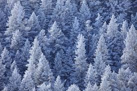 wintry blue front range colorado nate zeman photography
