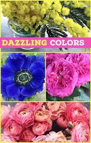 wholesale flowers near me floral friday color me happy dreisbach wholesale florists
