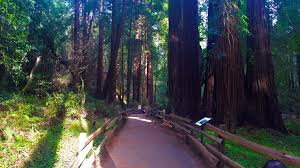 Muir Woods Map Best Trails In Muir Woods National Monument California 687