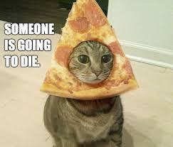Cat Breading Meme - pizza cat weknowmemes