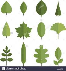 different types of trees set of flat green leaves different types of young leaves from trees