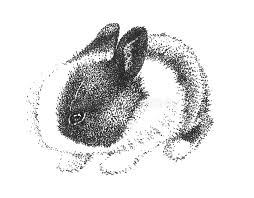 adorable cute bunny rabbit drawing stock photo image 31770850