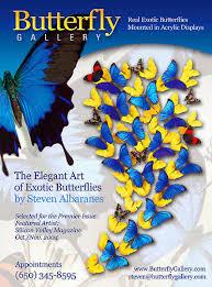 butterfly gifts butterfly gallery butterflies butterfly gifts butterfly