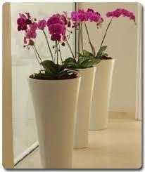 Indoor Plant Arrangements 122 Best Orchid Container Displays Images On Pinterest Plants
