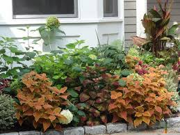 Plants For Patios In The Shade Great Alternatives For Shade Garden Plants The Captured Garden